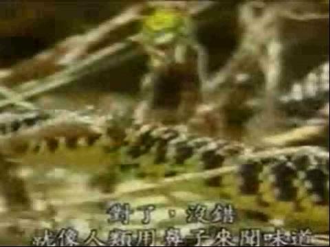 奇妙的动物世界 蛇的舌头