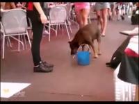 视频简介:胖乎乎的斗牛犬玩
