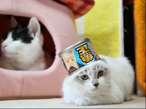 可爱的猫猫和小鸭子头像