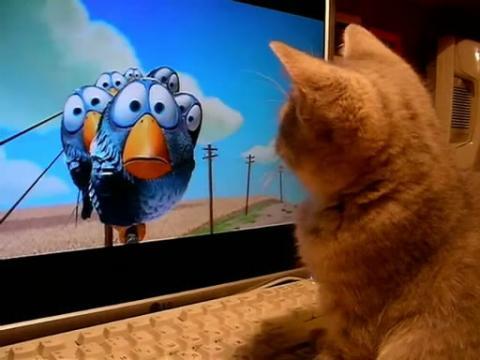 可爱的喵星人喜欢看小鸟动画片哈哈笑死我了