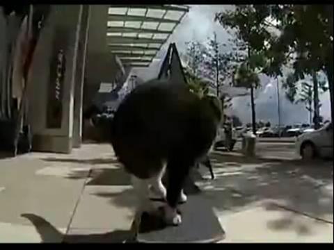小黑猪委屈表情包分享展示
