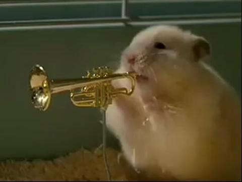 可爱小仓鼠组成的爵士乐队