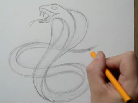 海贼王蛇姬素描,蛇素描图片,素描蛇图片,素描蛇