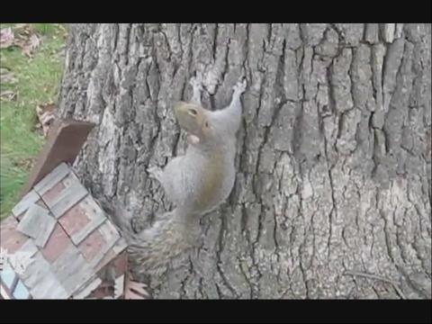 各种奇葩动物视频合辑