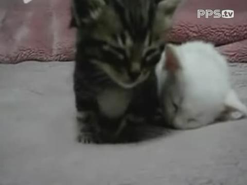 可爱猫咪困得不行要睡觉(宠物搞笑)